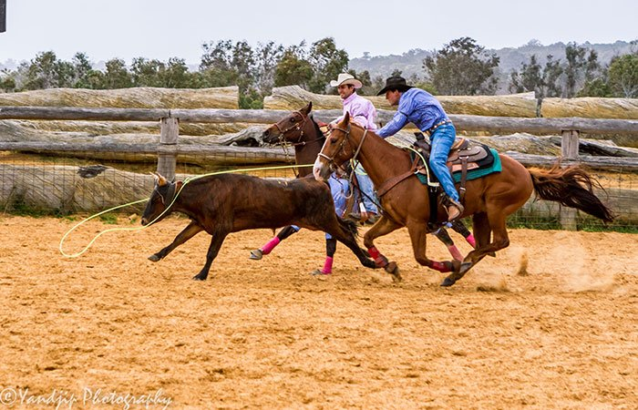 Rodeo and roping at the best rodeo in WA